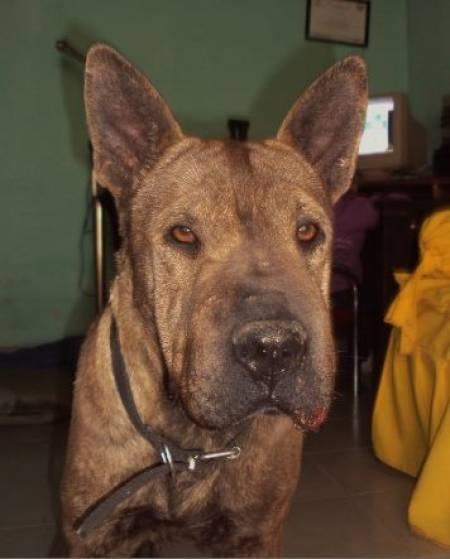 ¡Hermosa Perrita en Adopción publicada en Vivavisos! http://adopcion-mascotas.vivavisos.com.ar/adoptar-dar-mascota+san-cristobal/hermosa-sharpei-en-adopcion-/40906751