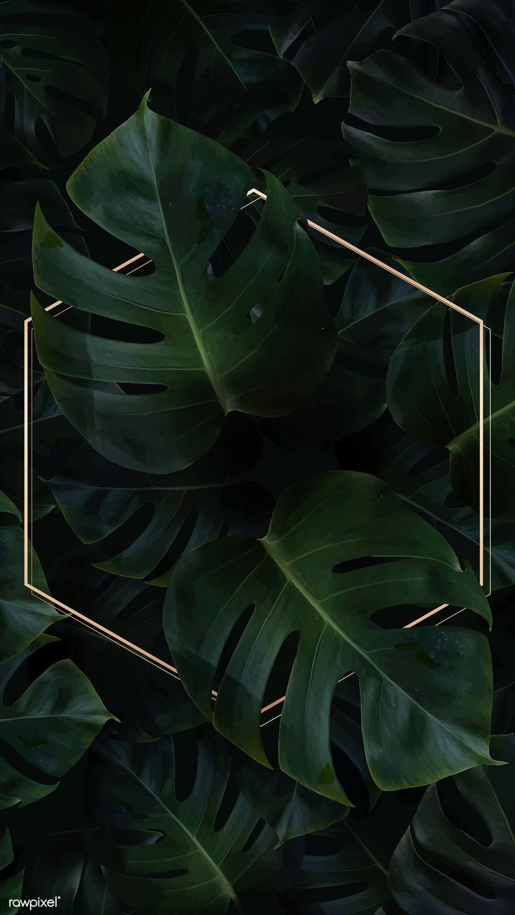 Download premium illustration of Hexagon golden frame on a tropical