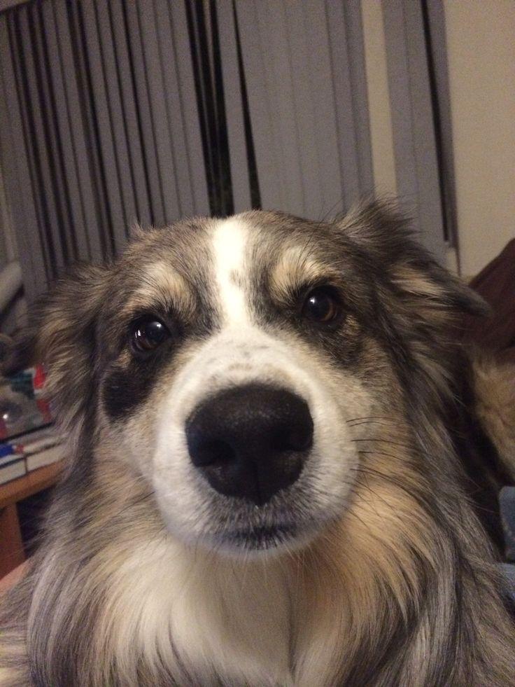 Yo pasa tiempo con mi perro todos los días. ¡Yo jugo busca con su! A veces, yo practico agilidad perro con su en concursos de perros.
