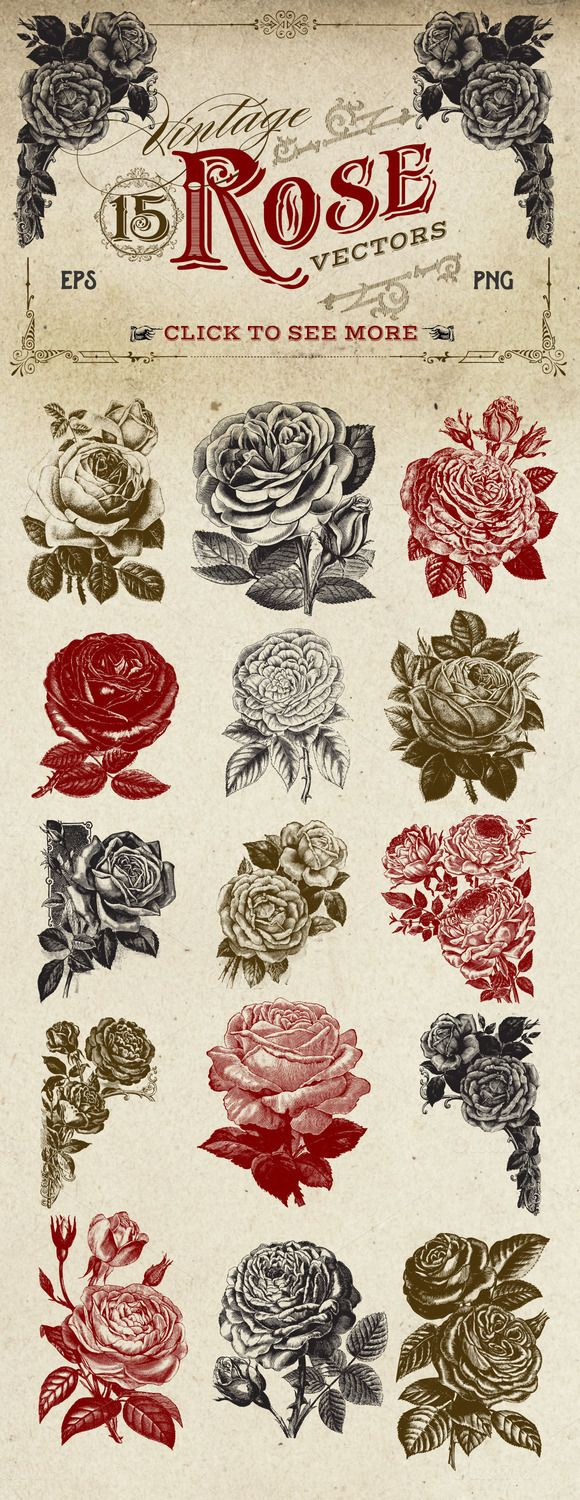 Vintage Rose Vector Graphics by Eclectic Anthology purchased from Creative Market