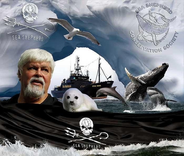 Sea Shepherds Rock!!