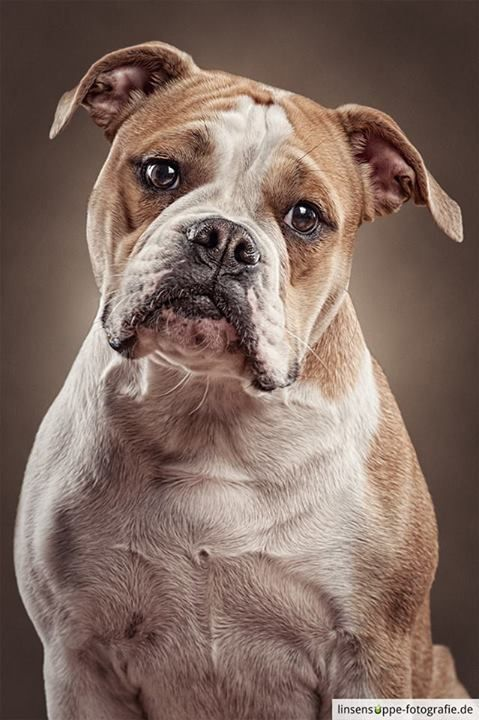 Best Pet Photography Images On Pinterest Photography Boston - Dog portrait photography shows how they hate wearing the cone of shame