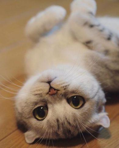愛されネコは目が命! 最高につぶらな瞳のネコちゃんに心うばわれる