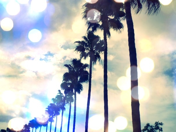 Palmtrees. Travel. Vacation. Gran Canaria ©charlotteolsson www.saltyform.se