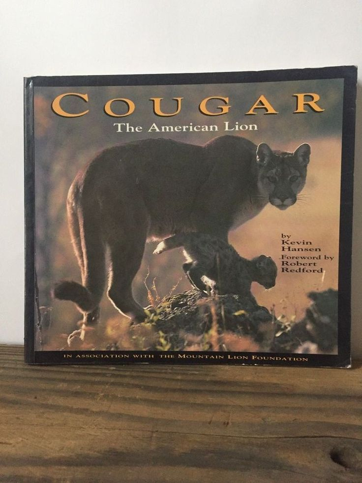 Cougar : The American Lion by Kevin Hansen, First Edition, Paperback 1992