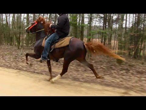 Talented Speed Racking Stallion 2 Yr Old - Jacob Parks Horsemanship - YouTube