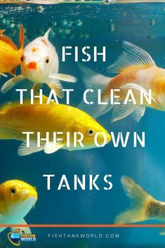 Fish That Clean Their Own Tanks The Best Algae Eaters Pinterest