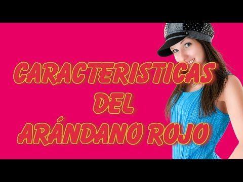 Caracteristicas Del Arándano Rojo Una Planta Con Multiples Propiedades - YouTube