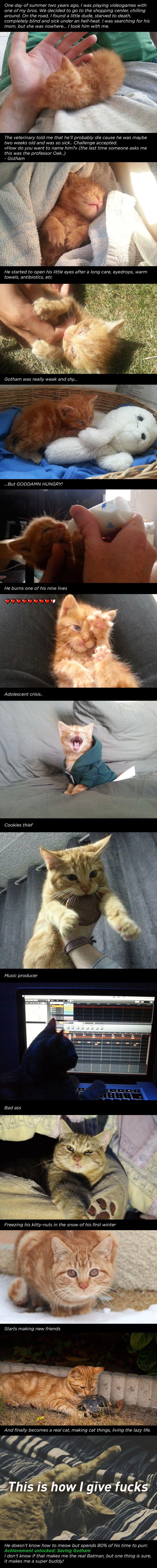 Batman saves Gotham kitty