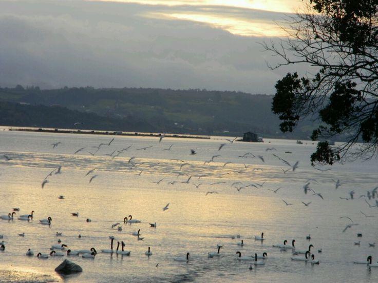 La variedad de aves que se reunen en este lugar ,cisnes, zarapitos, chorlitos.....etc.