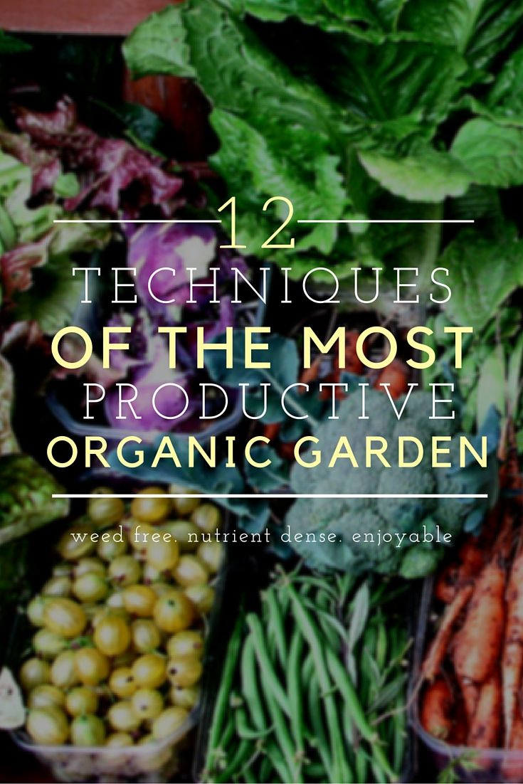 The 12 Techniques for the Most Productive Organic Garden