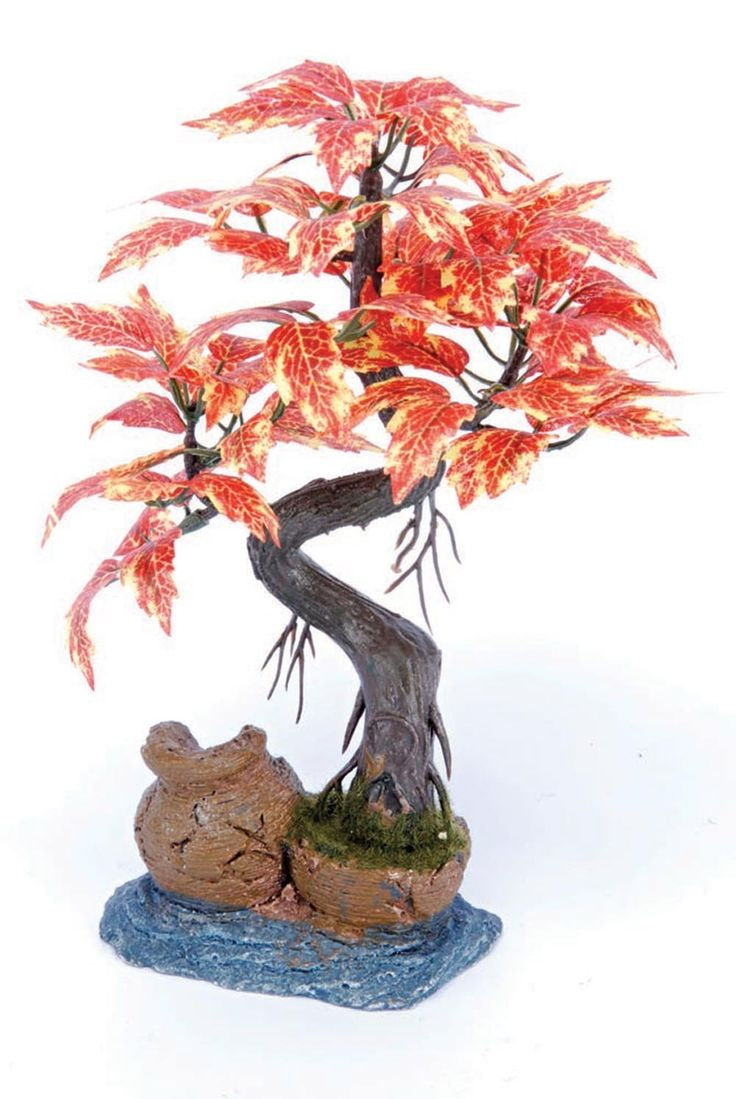 1000 Images About Bonsai Tree Collection On Pinterest