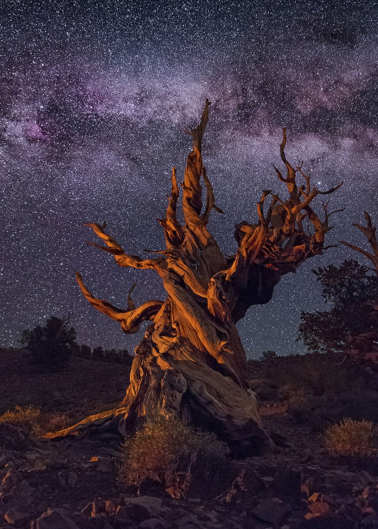 Kiss the Sky | Website Instagram Facebook Bristlecone Pine i… | Flickr