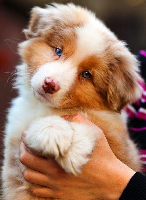 Dog cute   Cachorro fofo