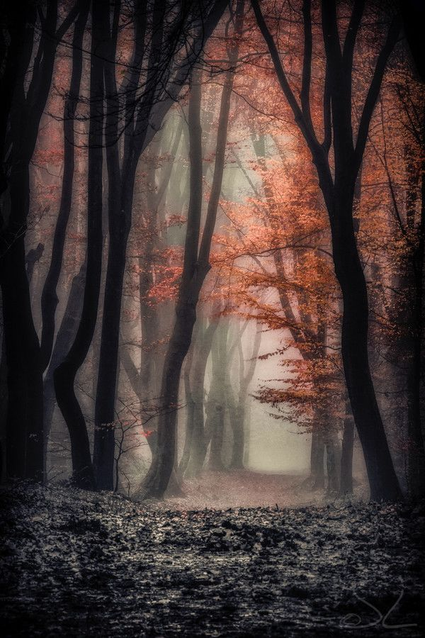 ~~Foggy Autumn ~ mystical forest, Netherlands by Joost Lagerweij~~