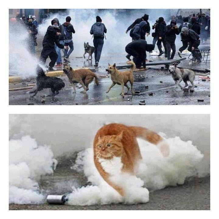 Animals in the Turkey protests