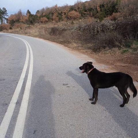 A walk with Buffakos♥ #buffakos #doglovers  #dogs #instagramdog #like4like #followme