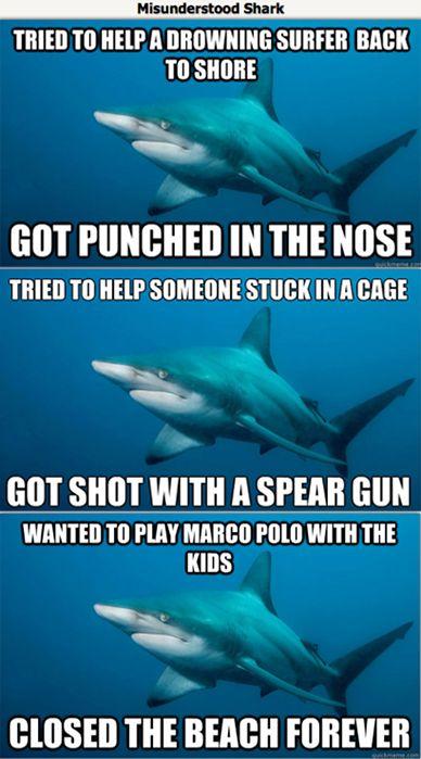 .: Misunderstood Shark