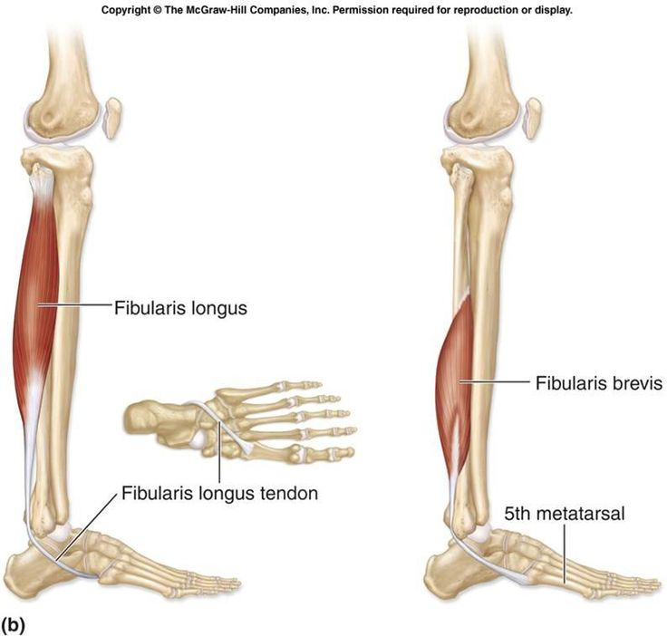 34 best Calf anatomy and exercises images on Pinterest | Anatomy ...