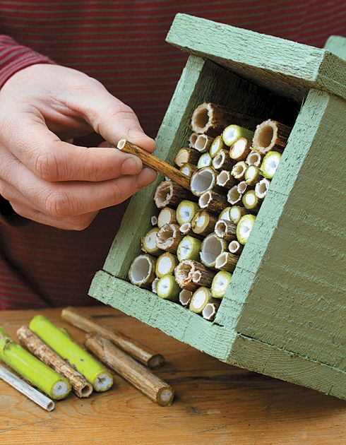 Step by step guide to building a bughouse to attract beneficial insects