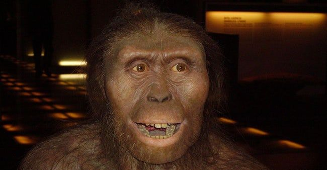 In Memoriam: All Members of the Human Family Tree That Were Bested by Evolution