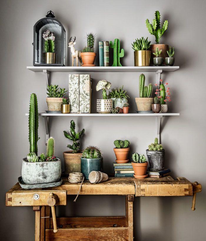 Cactus verzameling op industriële werkbank. // via Elle Decoration