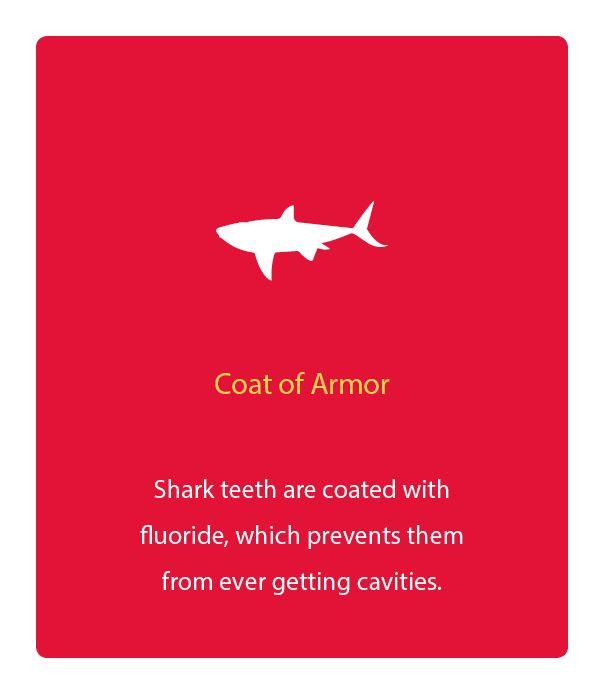 #Sharks Have Plenty Of #Fluoride
