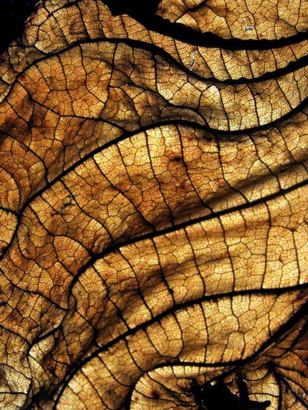Dry leaf close-up by Arina Jansen van Vuuren.