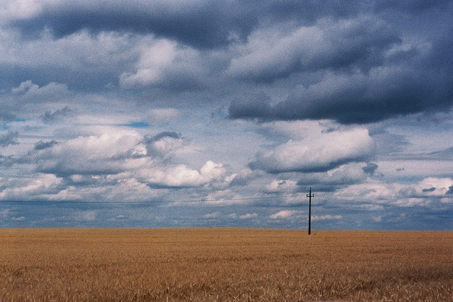 Wheat by Laszlo_Gerencser, via Flickr http://cameraclasic.blogspot.com