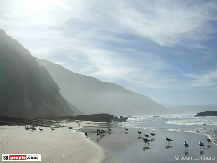Swartvlei beach Sedgefield South Africa