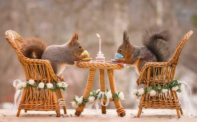 Royal Squirrels For A Royal Wedding By The Nature Photographer Geert Weggen Photography Animalphotography Squi Ecureuil Mignon Photo Ecureuil Ecureuil Drole