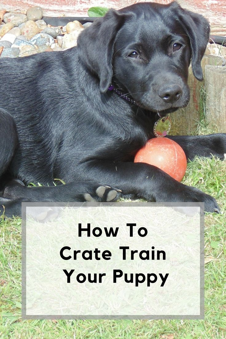 Top Tips For Crate Training A Puppy Training Your Puppy Crate