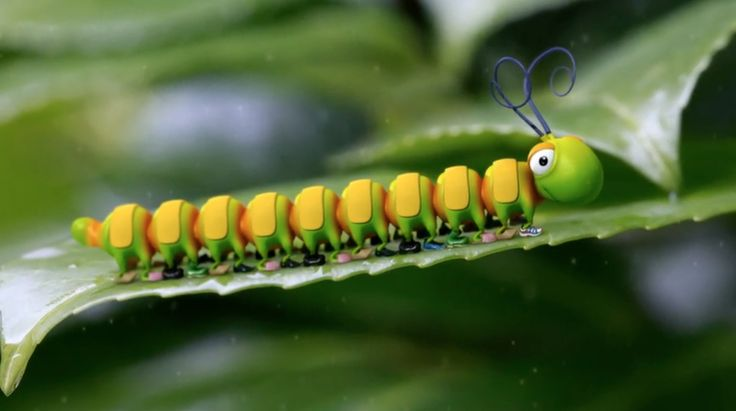 Caterpillar Shoes - Fun Insect Animation - Kids' Bedtime Story - Nursery...