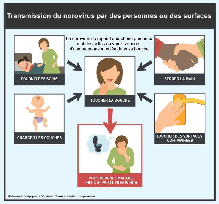 Gastro-entérite : symptômes & traitements   Creapharma