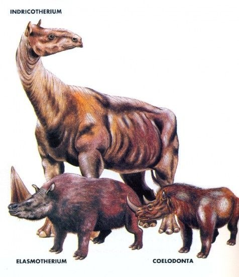 1000+ images about Pleistocene Megafauna on Pinterest ...
