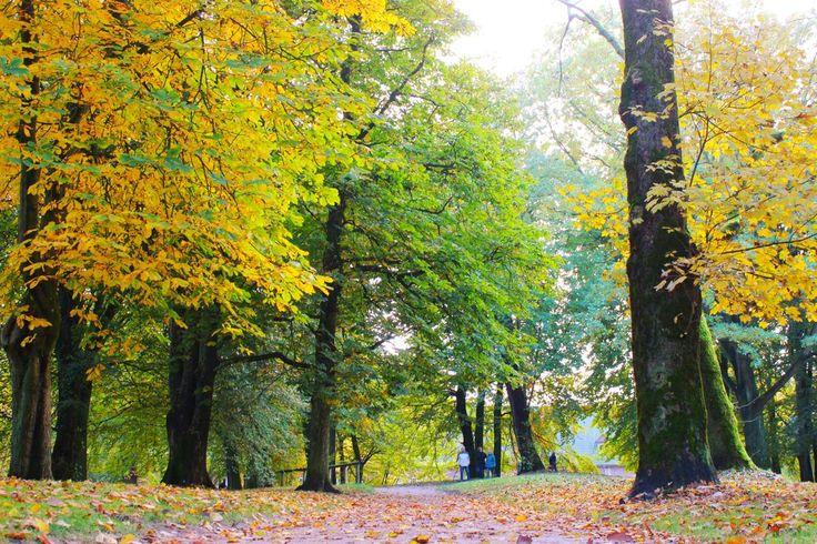 Husumer Schlosspark im Herbst / Husum castle garden in autumn (c) TSMH / M. Mainitz