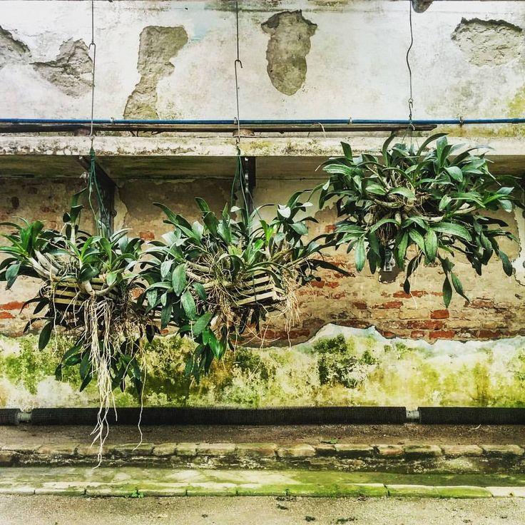 Piante sospese (presso Orto botanico di Padova)