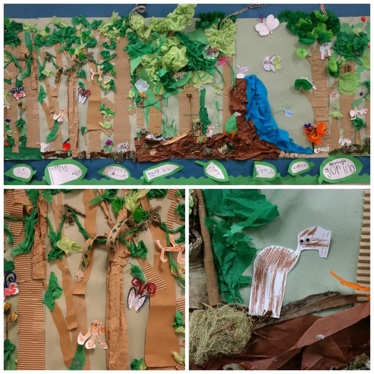 This was our Rainforest Collage that our class made for Rainforest Week! We showed the children how to make trees from cardboard and tissue paper and they glued them on themselves. They also used bark, moss and other natural materials that we collected on a walk in the forest. They then chose a photo of an animal and drew a little picture of it to put into the rainforest.