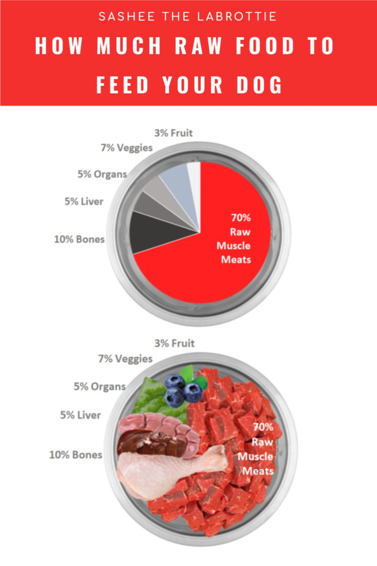 How Much Raw Food To Feed Your Dog in 2020 | Raw dog food ...