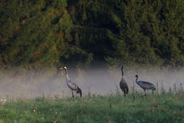Leśne Opowieści : 1 wrzesień, czas iść do ... lasu! ;)