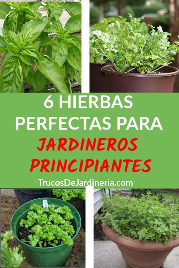 6 Hierbas Para Jardineros Principiantes
