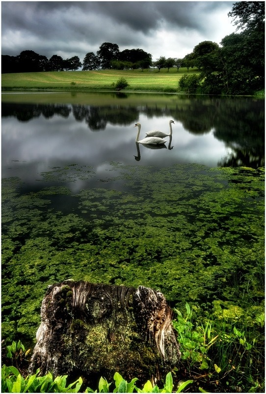 Swan Lake, Newry, Armagh, UK    Great setting for a book I'm working on.