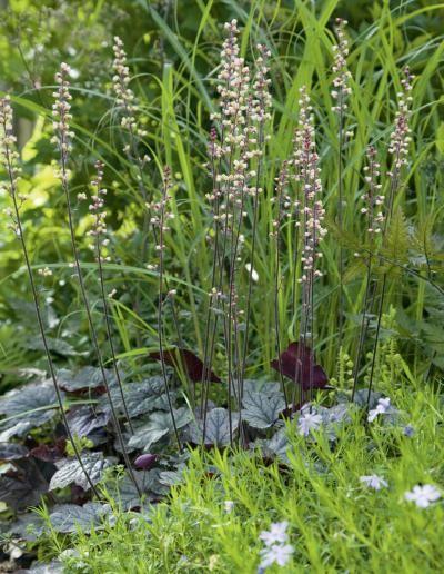 Keijunkukka, sammal-leimu ja ruohoja. | Vaistolla ja tunteella | Koti ja puutarha | Teksti Anne Aobadia | Kuvat Eva Lie