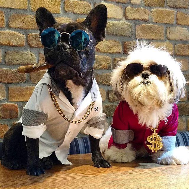 Bad Boys ...parceiros na vida e no crime...nosso maior pecado...lhes proporcionar orgasmos múltiplos não é mesmo @dogflavinho .  Bad Boys, partners in crime . #dogs_of_world #frenchiesociety #followme #bestwoof #brpets #frenchiesoverload #frenchbulldog #puppies #sunglasses #maisvoce #buzzfeedanimals #_inst_dogs  #ilovefrenchie #dogsofinstagram #frenchiephotos #barkpack #doggram #brpets #dogalãs #vempramatilhaGS #lillypets #shitzu #shitzulovers