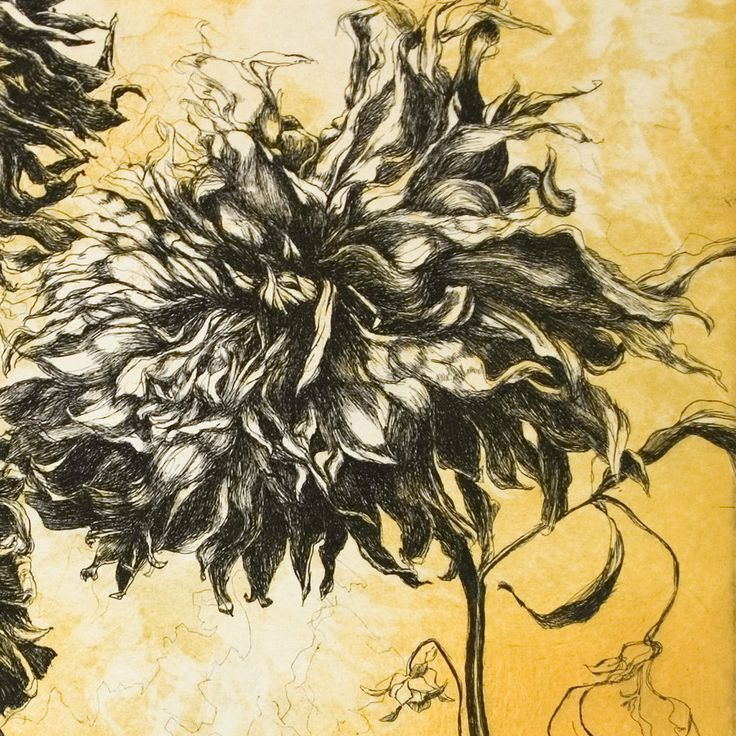 Fall Dahlias Etching bleed print edition of 97 by HelenGotlib, $350.00
