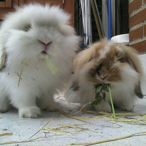 Mis lindos conejos!!