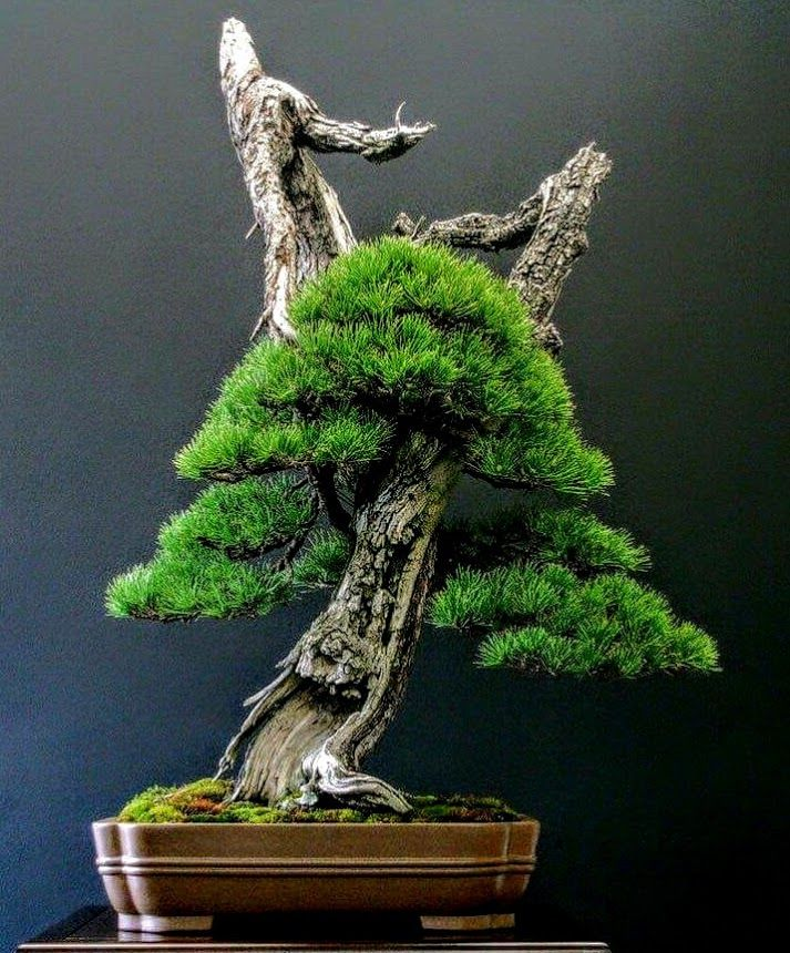 Cool Bonsai, love the straight lines. Do you like it? Photo by Jiang Wen.