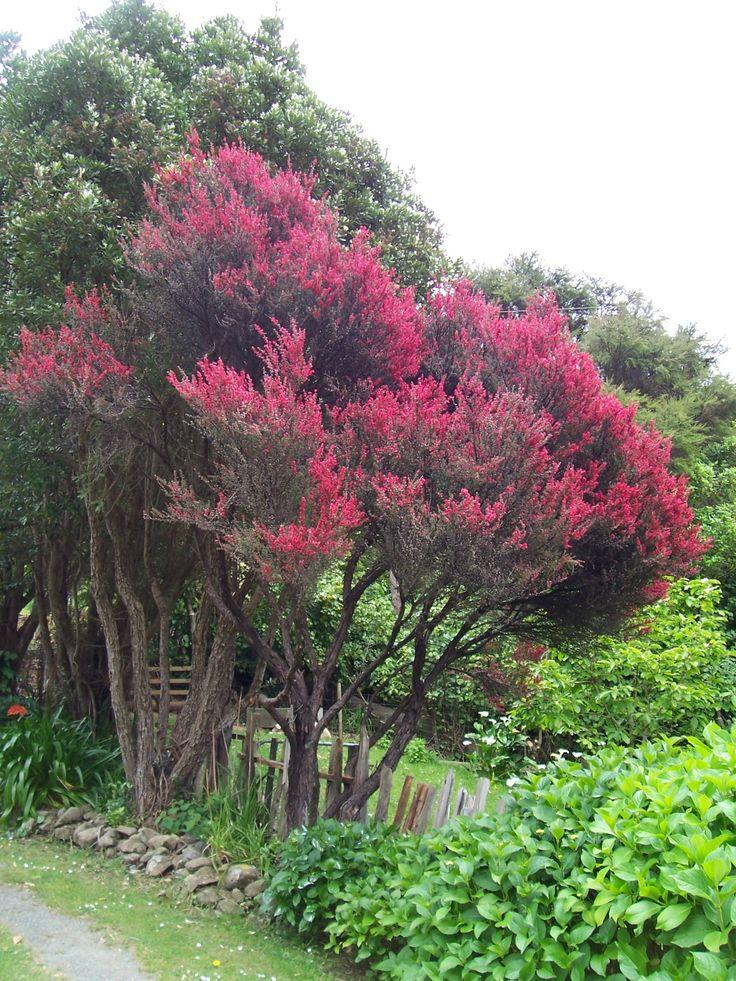 manuka tree | Manuka, the tree by ~silverfernn on deviantART