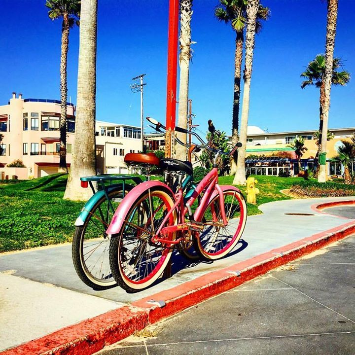 I feel like this picture represents everything I need out of life. Sunshine  palm trees and bikes for two   An accumulation of 'things' doesn't make us happier life's experiences do.  #simplelife #beachlife  #happyplace #onemanstrash #trueformlife