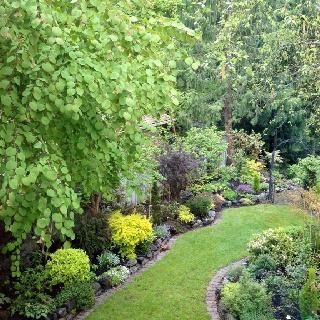 Back garden in spring: Gardens, Gardening, Spring